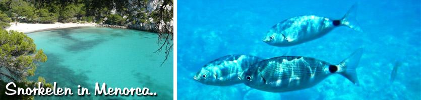 snorkel---intro